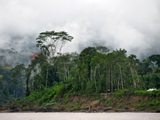 Mist in Madidi National Park
