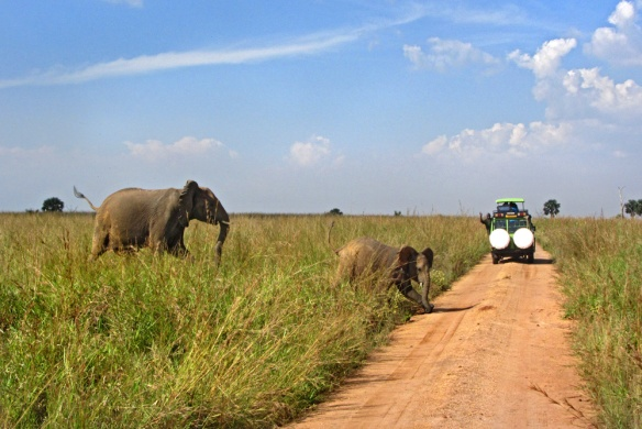 Safari in Murchison Falls National Park, Uganda