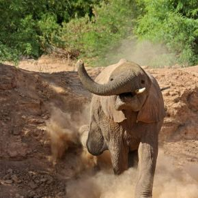 Friday photo: The desert elephant, Damaraland, Namibia