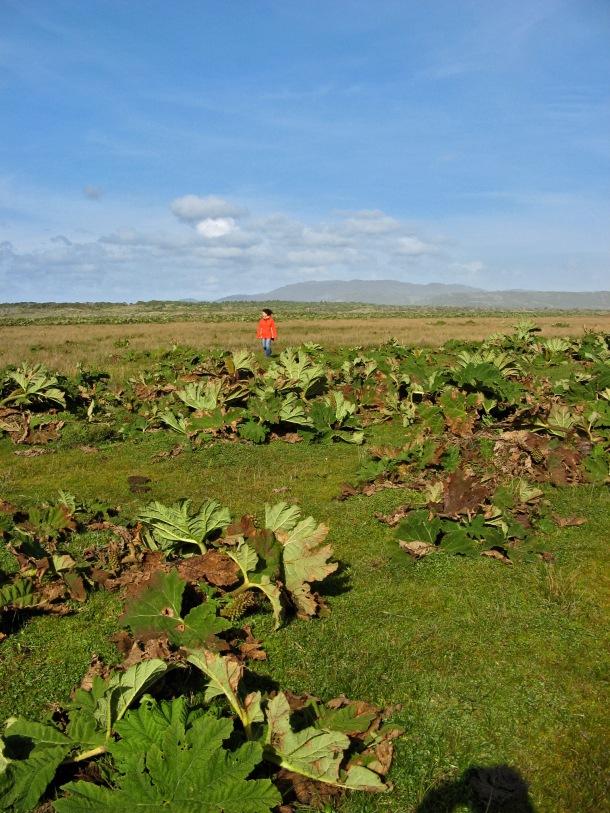 Strange vegetation on Chiloe Island, Chile