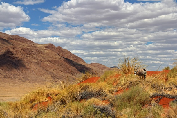 View of Namib Desert with oryx, from Wolwedans Dune Lodge, Namibia, Africa
