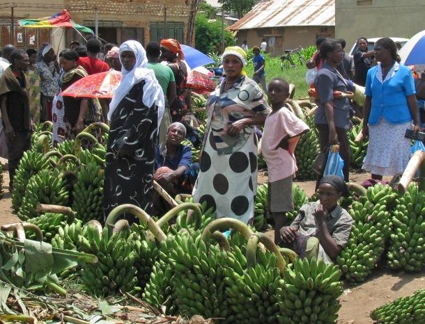 Matooke - green plantain - in Kihihi market, Uganda, Africa.