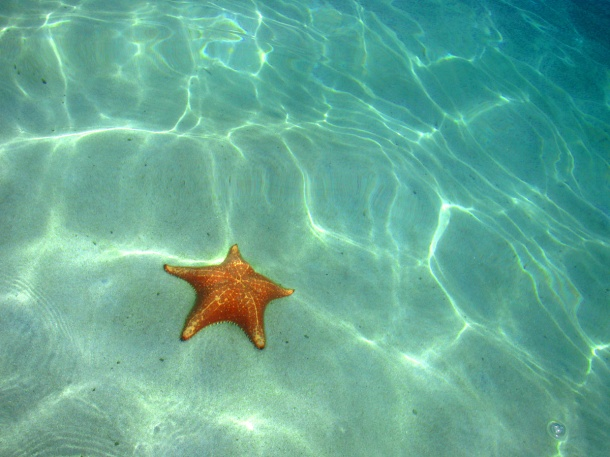 The Caribbean waters off Starfish Beach, Bocas del Toro, Panama