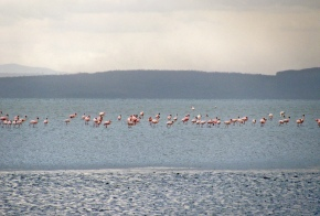 Photo gallery: Abiata, Ethiopia's dying lake