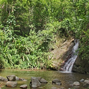 Trekking to Tobago's Real Fountain of Youth