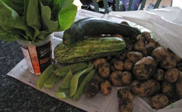 Funny shaped allotment vegetables, still muddy