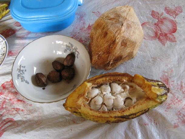 Ecuador jungle cacao chocolate castanas coconut