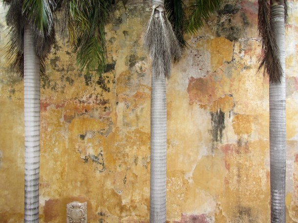 Palm trees and peeling paint, Old Cartagena, Colombia