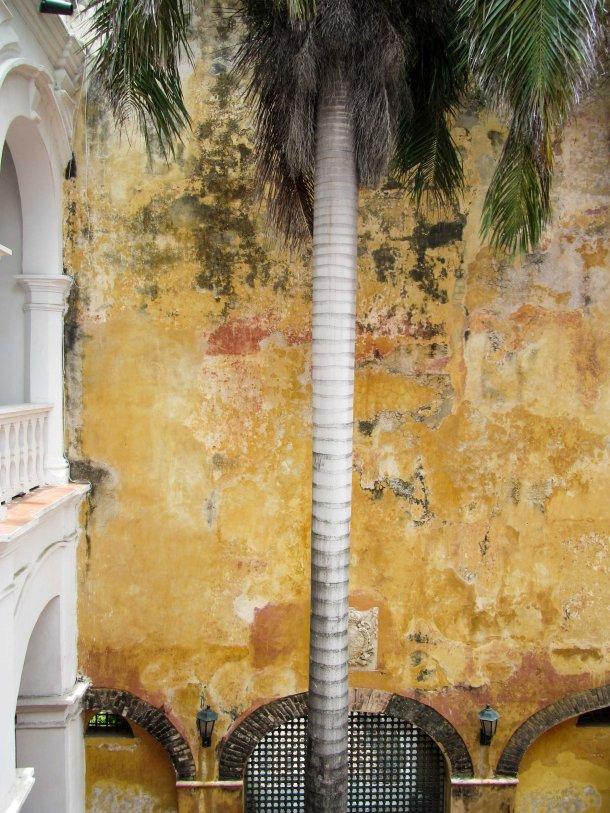 peeling paint palm tree Cartagena Colombia