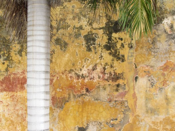 Palm tree and faded wall, Old Cartagena, Colombia