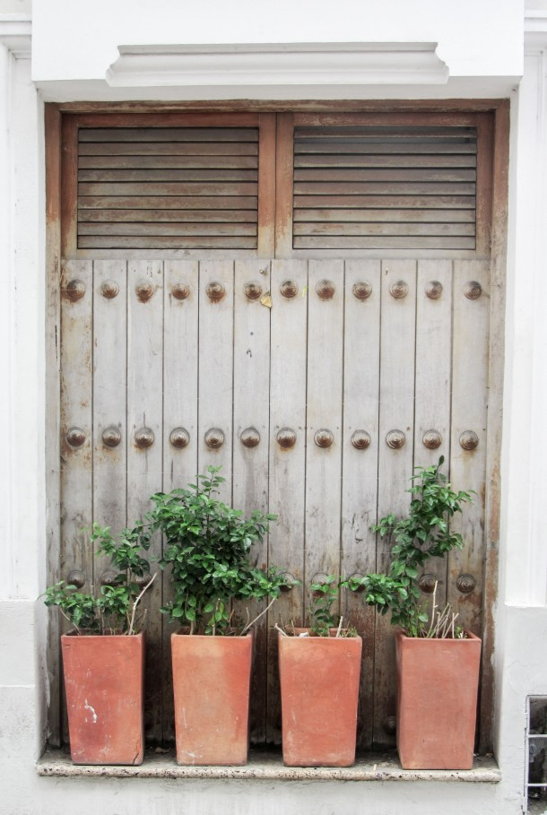 Window shutters plants Cartagena Colombia